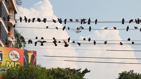 Pigeons on the wires in Yangon, Myanmar Stock Video Footage