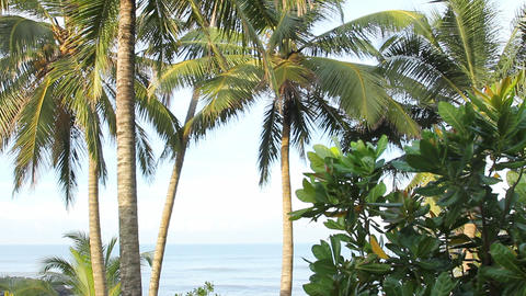 sea and coconut palm Stock Video Footage