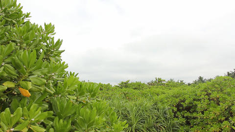 Green tropical jungle Stock Video Footage