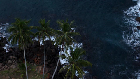 Top view of tree palm Stock Video Footage