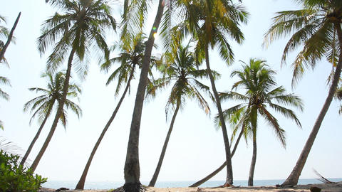 Pamltrees and Sea Footage