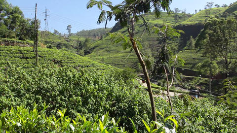 Tea valley Stock Video Footage