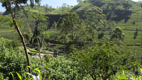 Tea Valley. stock footage