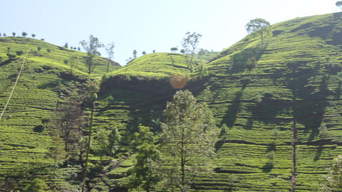 Tea Plantation In Nuwara Eliya,Ceylon stock footage