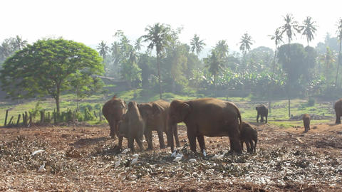 Group Of Elephants Stock Video Footage