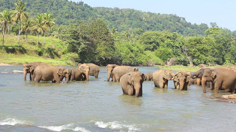 Elephants playing in the water Stock Video Footage