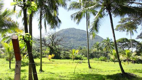 Hill, Sri Lanka Footage