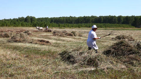 Man and woman gather hay in a haystack Stock Video Footage