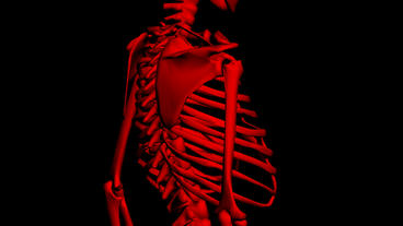 Rotation Of 3D Skeleton.ribs,chest,anatomy,human,medical,body,skull,biology,medi stock footage