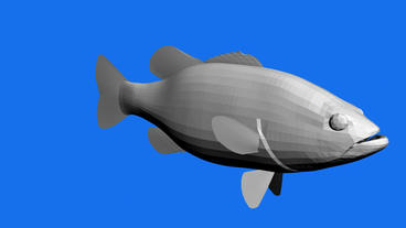 Moving of 3D fish.sea,ocean,water,animal,isolated,tropical,underwater,aquarium Animation