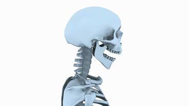 Rotation of 3D skeleton.skull,anatomy,human,medical,body,biology,medicine,scienc Animation