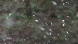 White Snowflakes In Winter Footage