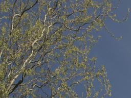 Summer tree branch 1 Stock Video Footage