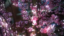 Spring Season Stock Video Footage