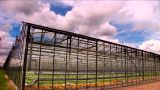 Timelapse Clouds Roll Over A Large Greenhouse Farm stock footage