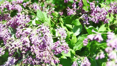 Turning lilac HD Footage