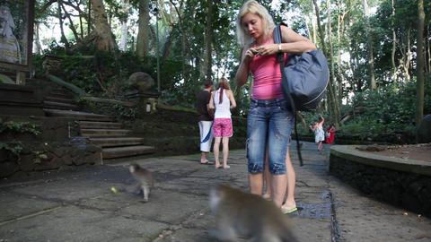 Monkeys forest in Ubud , Bali Stock Video Footage