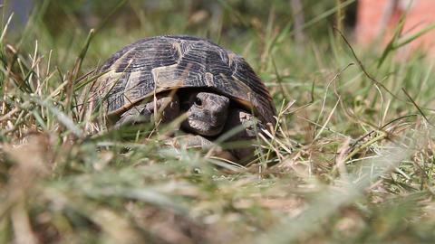 Turtle Stock Video Footage