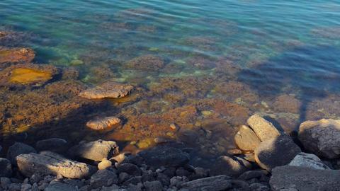Beautiful sea landscape.marine algae Footage