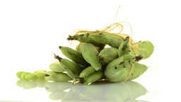 Green beans Footage