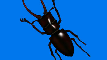 Black beetle.bug,insect,nature,closeup Animation