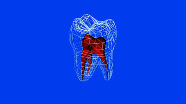 Tooth Model.dentistry,medical,medicine,Grid,mesh,sketch,structure. stock footage
