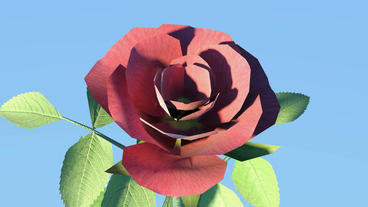 Red roses,leaves and branches Animation