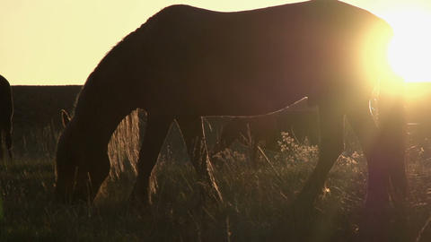 Horses in the Sunlight HD Footage