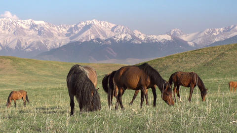 Picturesque Pasture Stock Video Footage
