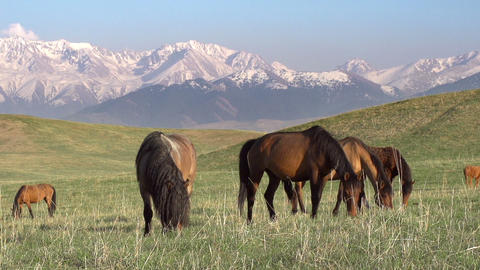 Picturesque Pasture Footage