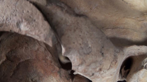 The skull of a horse Stock Video Footage