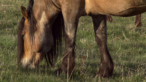 Horse with long Mane Stock Video Footage