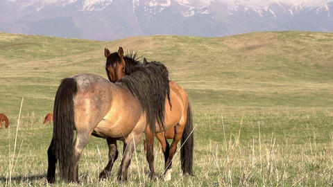 Horses Love Footage