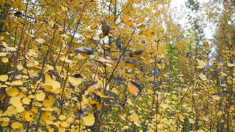 Autumnal leaves Stock Video Footage
