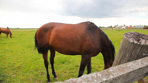 Horses In The Field stock footage