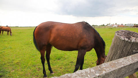 Horses in the field Stock Video Footage