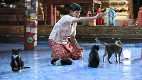 Jumping cats in Nga Phe Kyaung Monastery Stock Video Footage