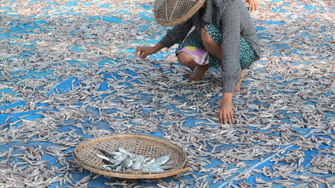 Woman turning dry fish Stock Video Footage