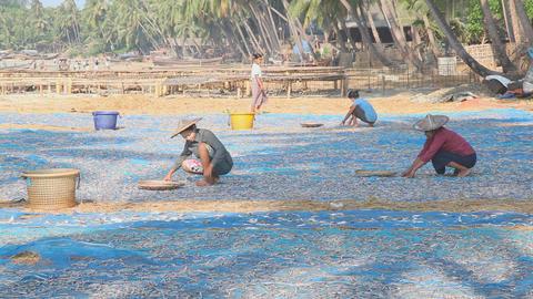 Women turning dry fish Stock Video Footage