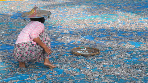 Women turning dry fish Footage