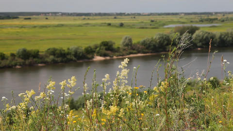 Riverbank landscape Stock Video Footage