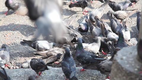 Yangon gull 8369 HD Stock Video Footage
