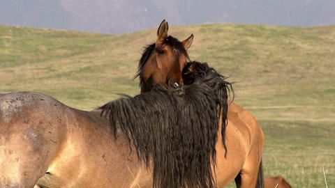 Horses Tenderness Stock Video Footage