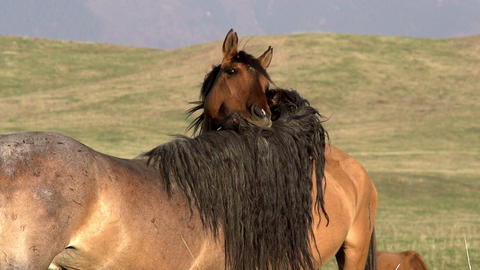 Horses Tenderness Footage