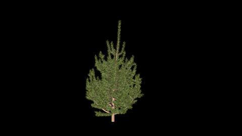Animation Tree 4 Stock Video Footage