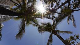Miami Palm Trees Stock Video Footage