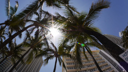 Miami Palm Trees Stock Video Footage