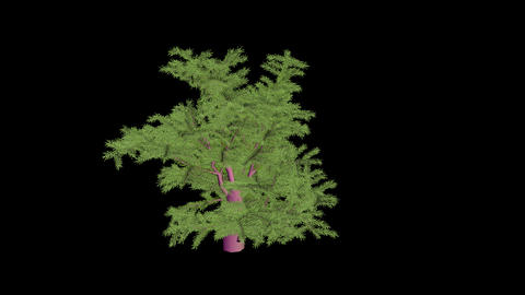 Animation   Tree  5 stock footage