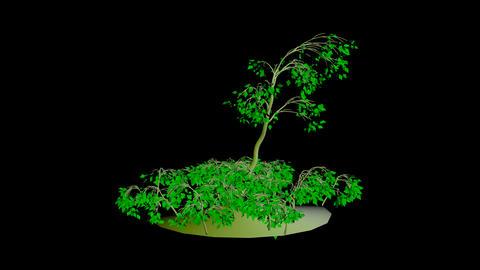 Animation Tree 7 Stock Video Footage