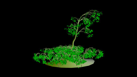 Animation Tree 7 Animation